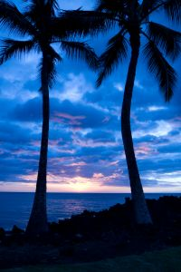 Palm Trees After Sunset